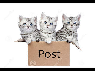three-young-cats.jpg